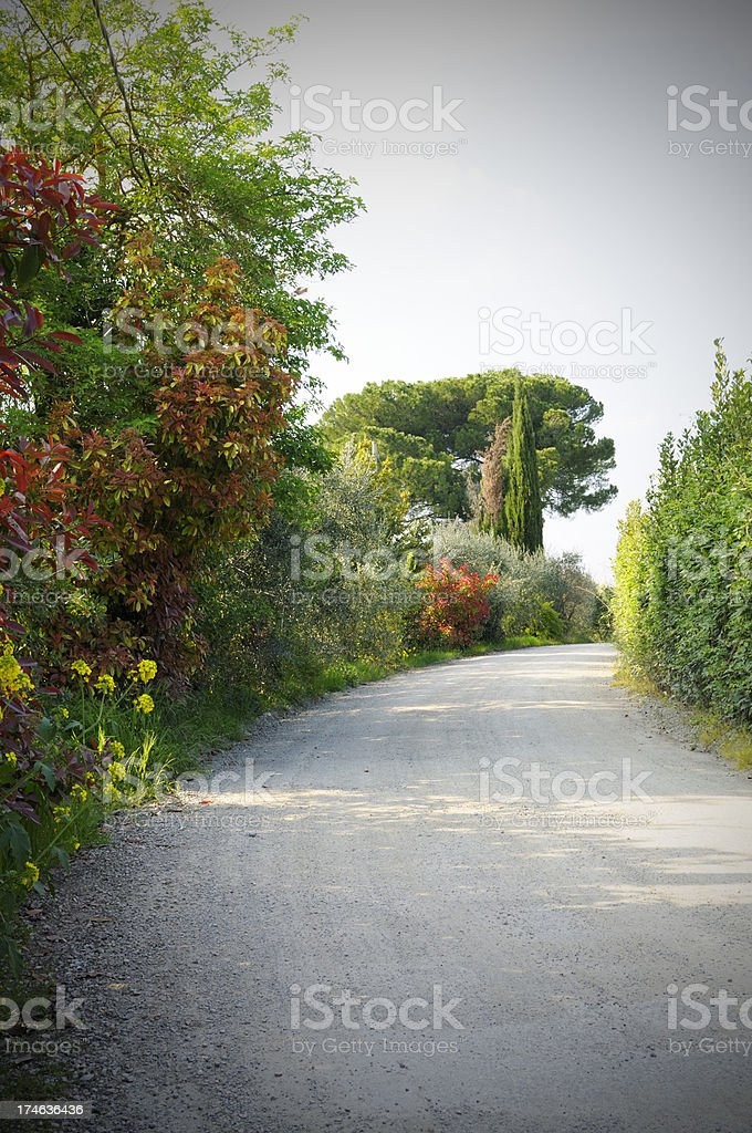 Country road in springtime royalty-free stock photo