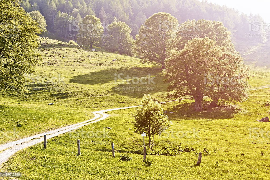 Country Road in Summer royalty-free stock photo