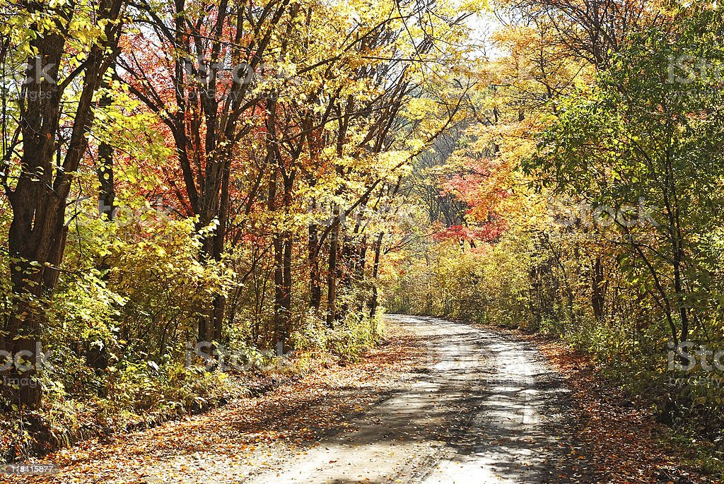 country road in the fall forest royalty-free stock photo