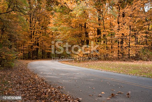 Fall foliage with a road