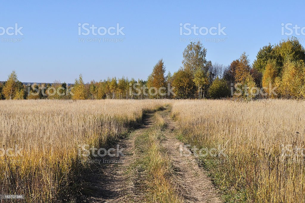 Country road in the field stock photo