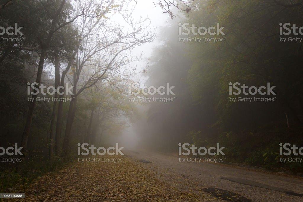 Bir ülkede yol kenarlarında ve düşmüş le ağaçları ile sis - Royalty-free Alçak Stok görsel