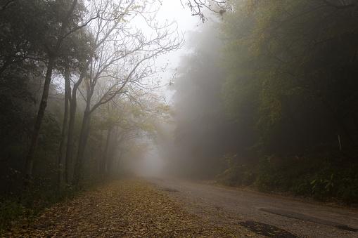 Bir Ülkede Yol Kenarlarında Ve Düşmüş Le Ağaçları Ile Sis Stok Fotoğraflar & Alçak'nin Daha Fazla Resimleri