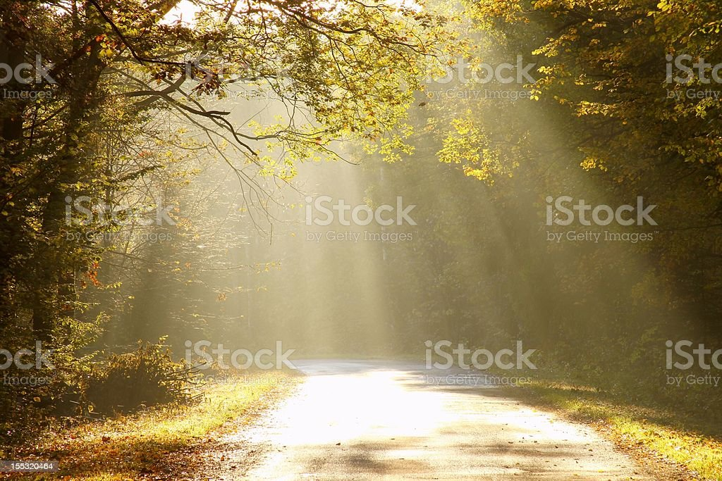 Country road in the misty forest at sunrise royalty-free stock photo