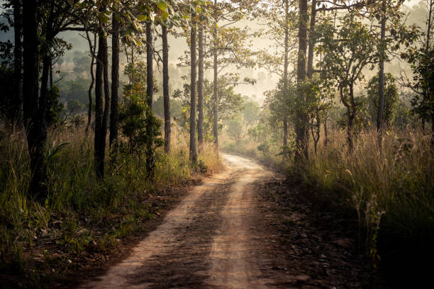 Country road in the tropical forest with dust local road ans pine trees jungle.
