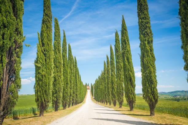 landstraße in der toskana. schöne italienische zypressen entlang der straße. - ferienhaus toskana stock-fotos und bilder