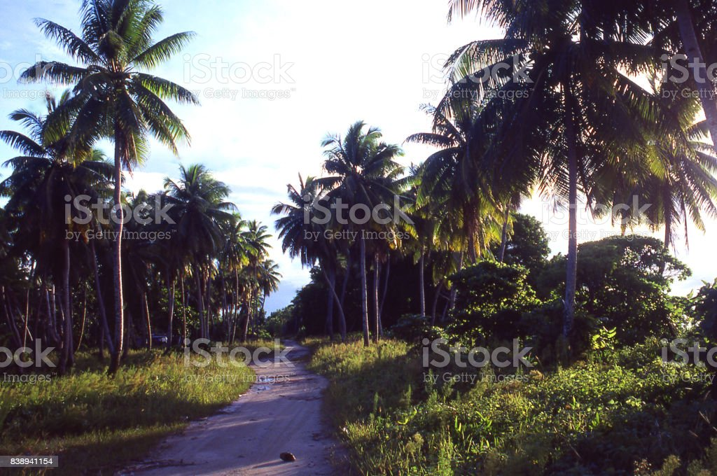 Country road on atoll near dusk through coconut palms on atoll in the Marshall Islands Asia-Pacific stock photo
