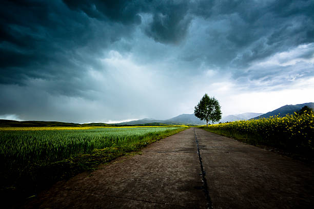 country road – Foto