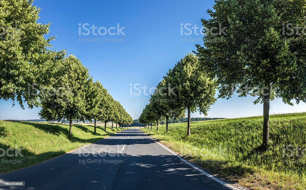 Country road running through a tree alley stock photo