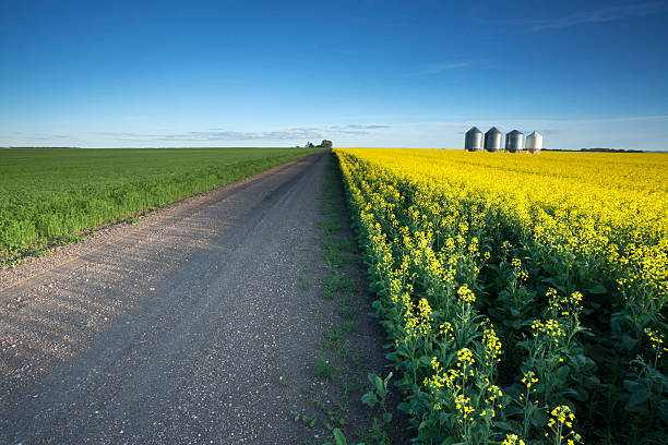 Country Road Saskatchewan Country road out in the Prairies, Saskatchewan. Image taken from a tripod. canola stock pictures, royalty-free photos & images