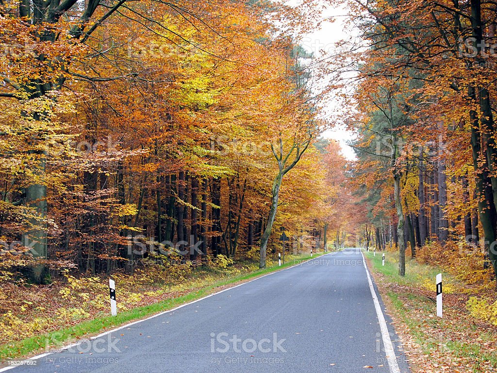 country road through a beech tree forest in autumn time stock photo