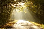 Magic sunlight backlit autumn leaves of trees and falls on the country road through a misty autumn woods.