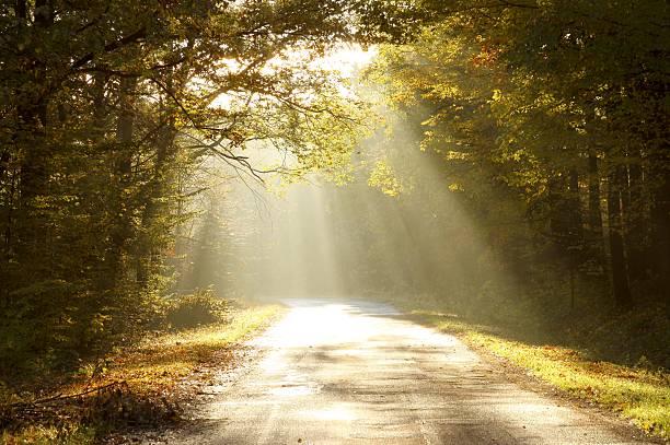 Route de campagne à travers bois d'automne à l'aube - Photo