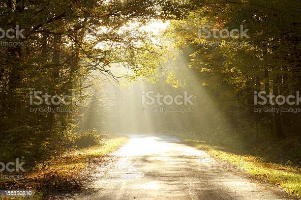 Photo of Country road through autumn woods at dawn