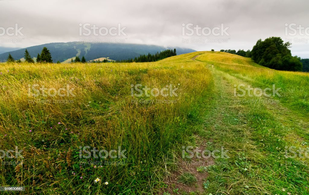 country road through grassy fields in mountains stock photo