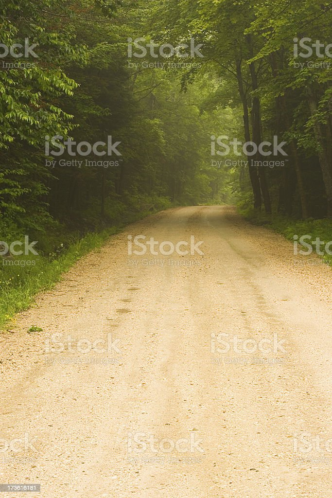 Country road through misty forest royalty-free stock photo