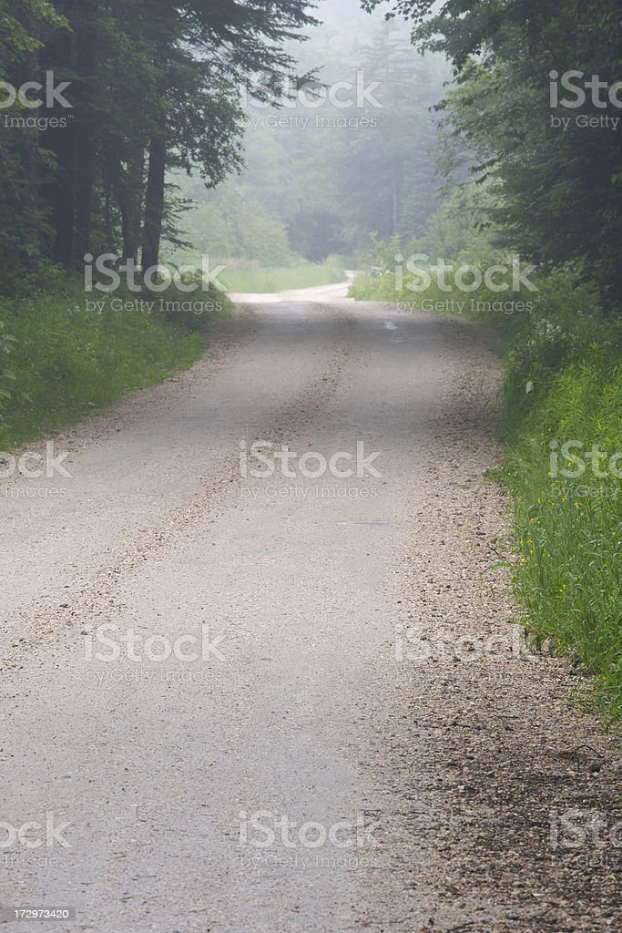 Country Road through Summer Forest royalty-free stock photo