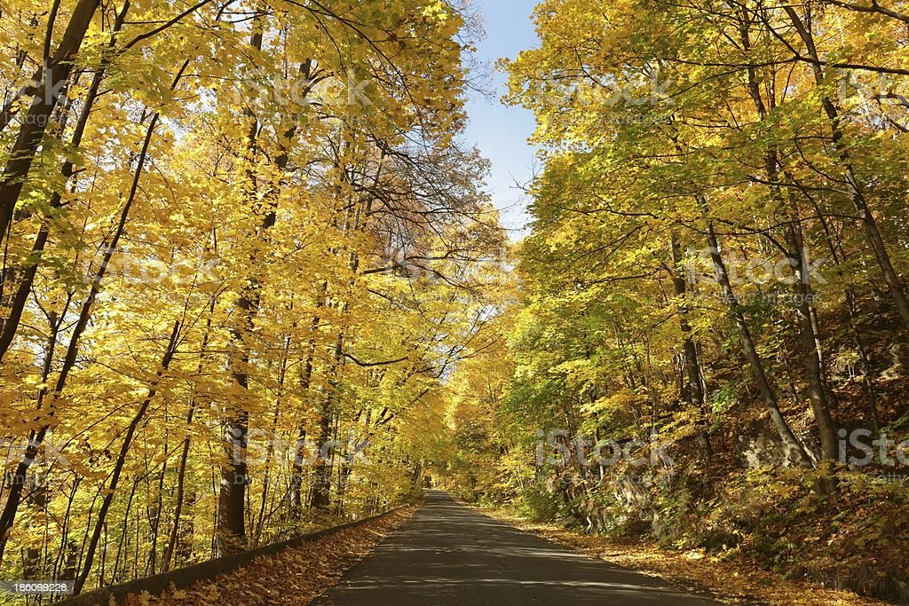 Country road through the autumn forest royalty-free stock photo