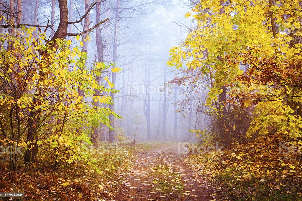 Country Road through the Foggy Autumn Forest royalty-free stock photo