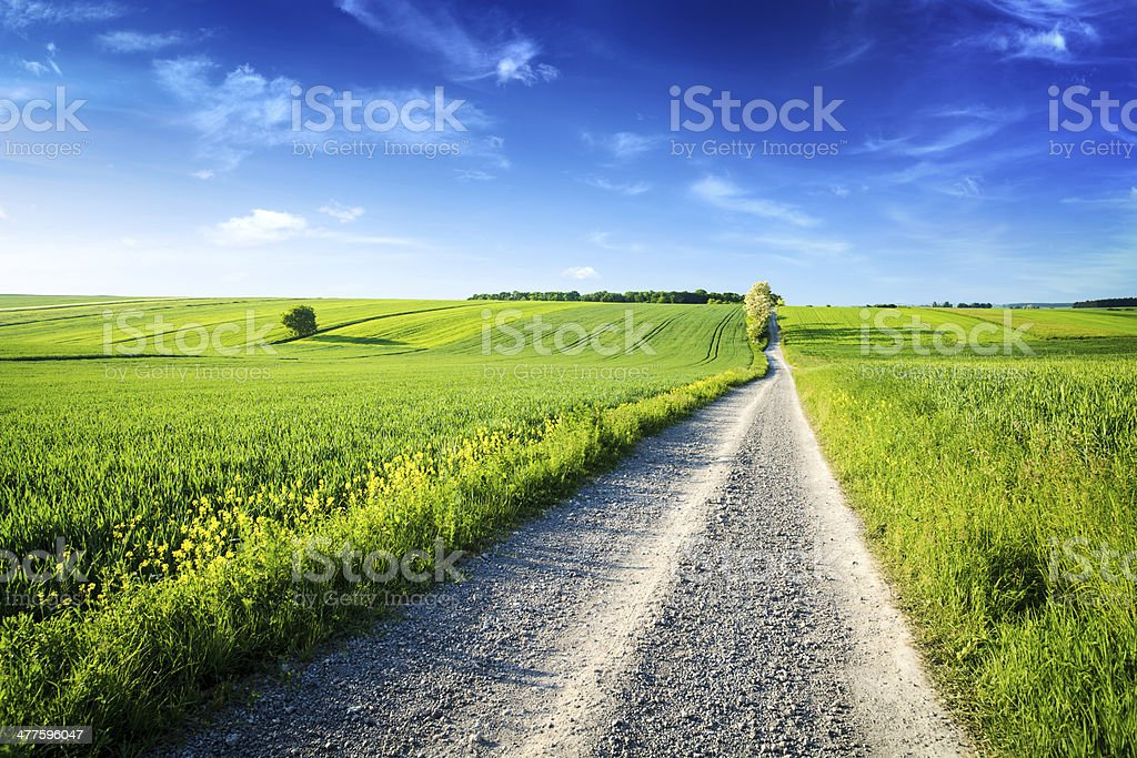 Country Road through the Spring Landscape - Green Fields royalty-free stock photo