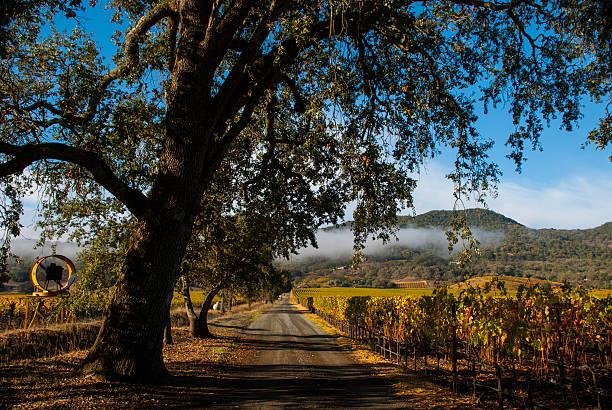 ländliche straße durch weinberge herbst nahe yountville napa valley, kalifornien - robert weinberg stock-fotos und bilder