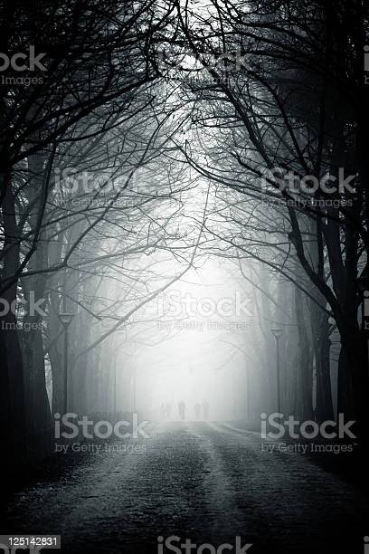 Photo of Country Road Tree Canopy in the Fog, Nobody