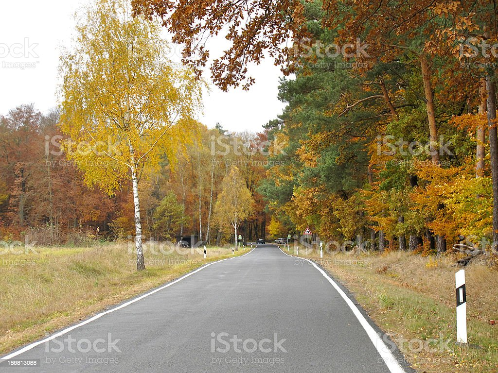 country road with birch and beech tree in autumn time stock photo