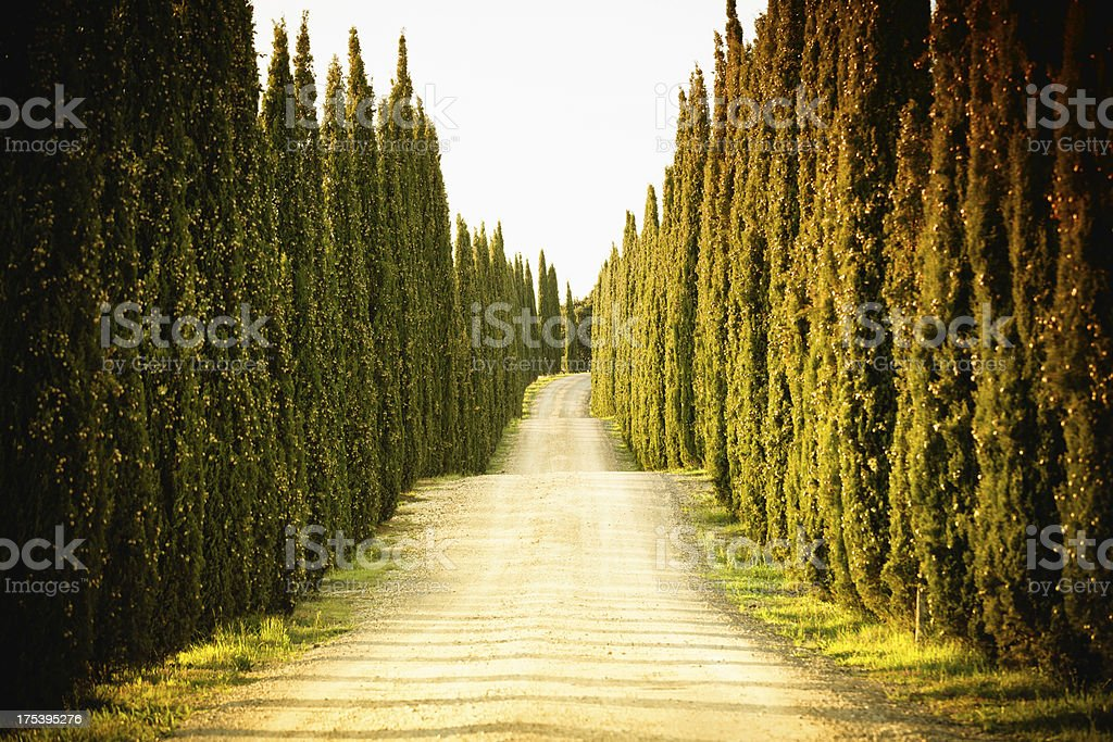 Country Road with Cypress in Tuscany, Italy stock photo