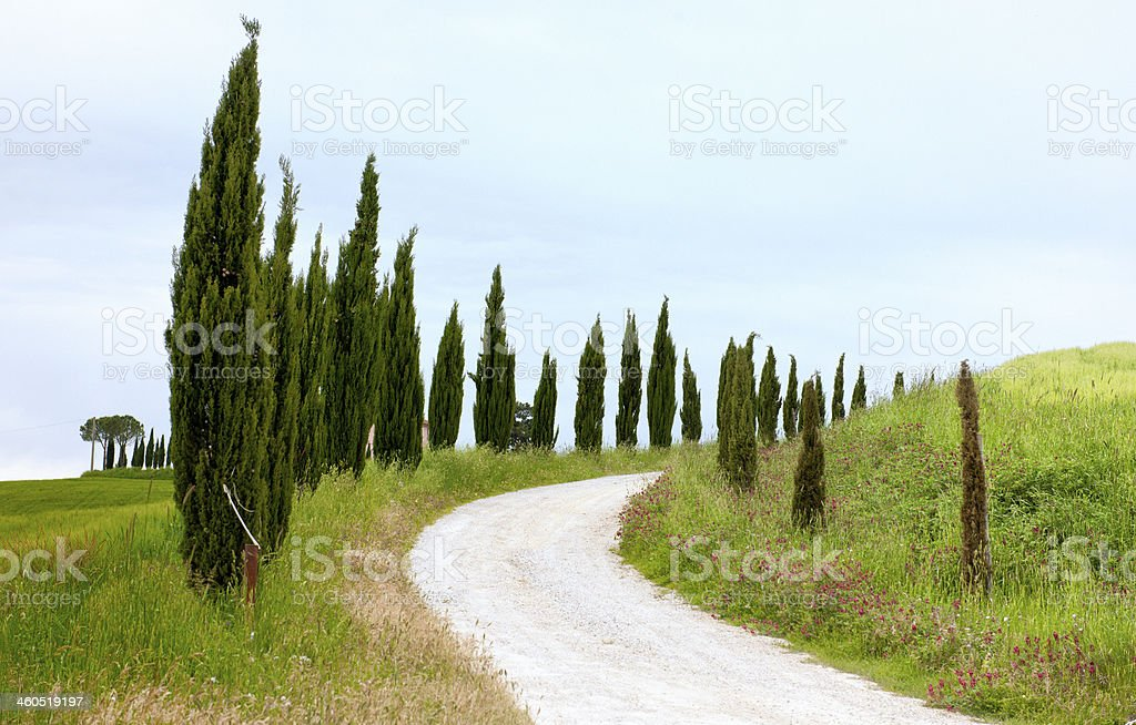 Country Road with Cypress Trees in  Spring Tuscany royalty-free stock photo