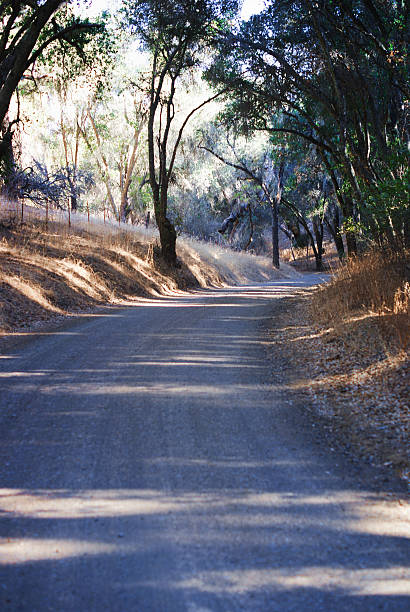 Country Road with Oak Trees stock photo