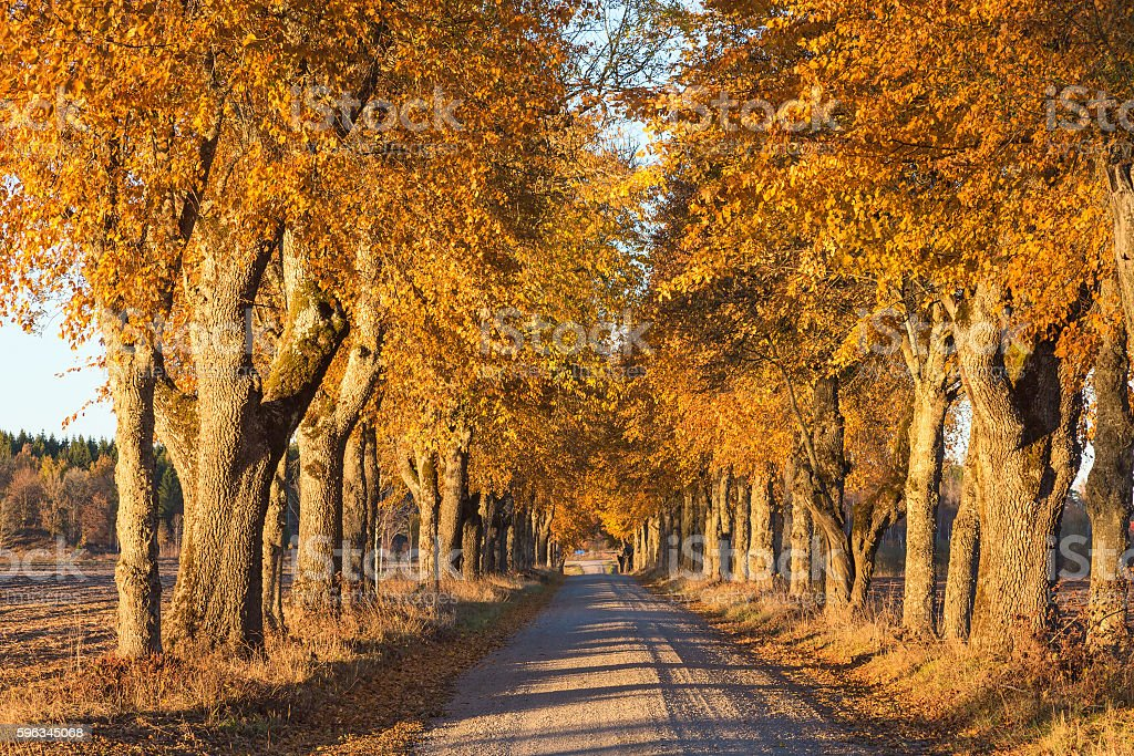Country road with trees in autumn royalty-free stock photo