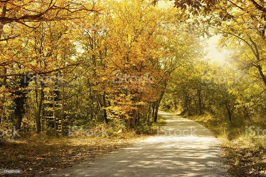 Country Road,Tuscany,Italy royalty-free stock photo