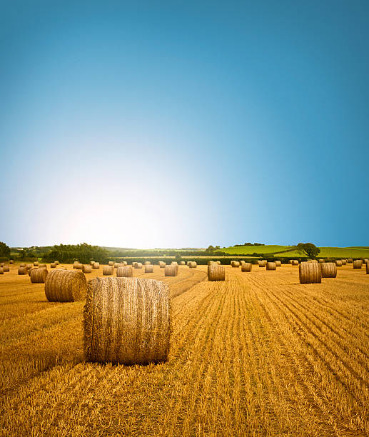 Country Side Hay Bale Scenery Vibrant, Summer/Autumnal scene of freshly cropped, farm land hay bales, accompanied by an empowering sunrise. Beautifully saturated, accent colors. hay stock pictures, royalty-free photos & images