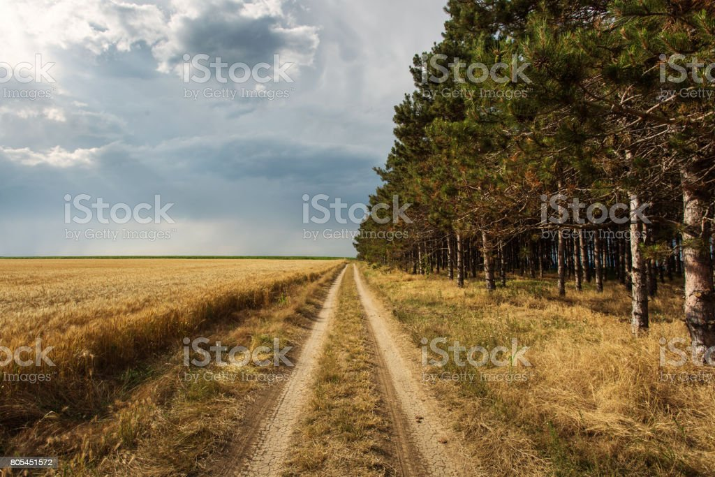 Country side road with half forest and half storm clouds stock photo