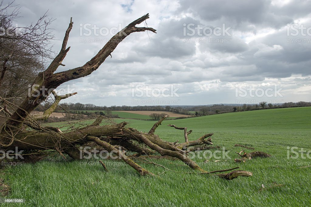 Country Storm Damage stock photo