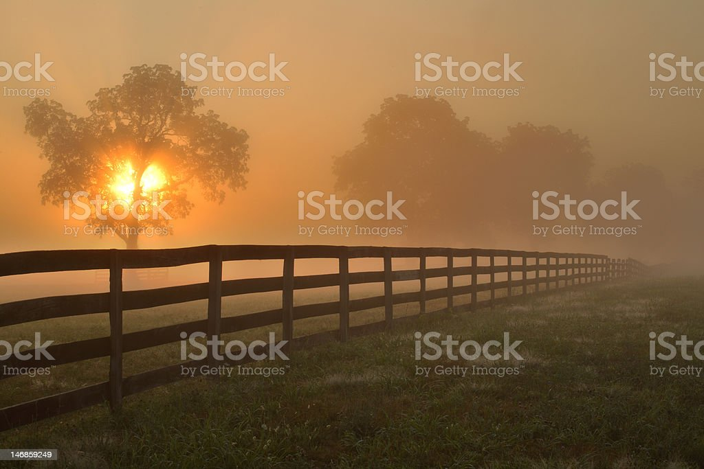 Country Summer Morning royalty-free stock photo