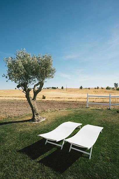 country tourism liegestühlen und baum-porträt - oliven wohnzimmer stock-fotos und bilder