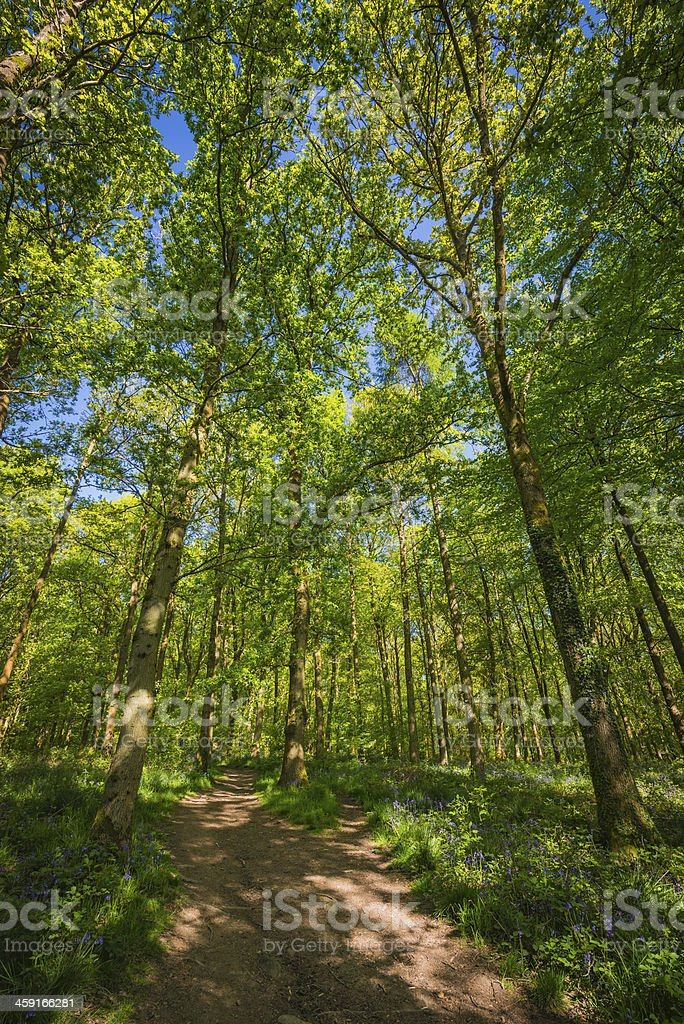 Country trail through idyllic green forest canopy tranquil wild woodland stock photo