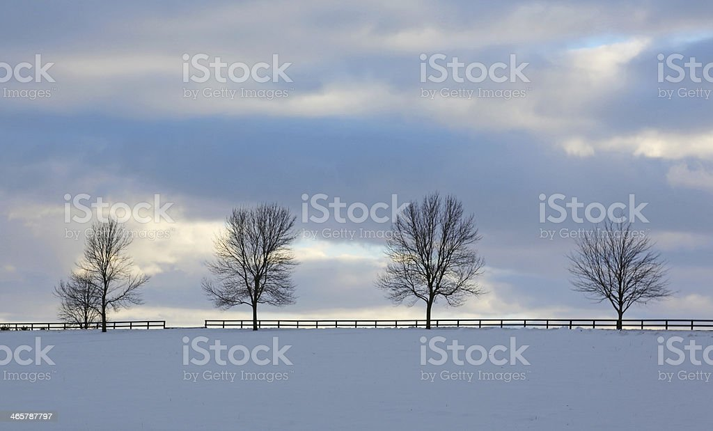 Country trees and fence at dusk in winter stock photo