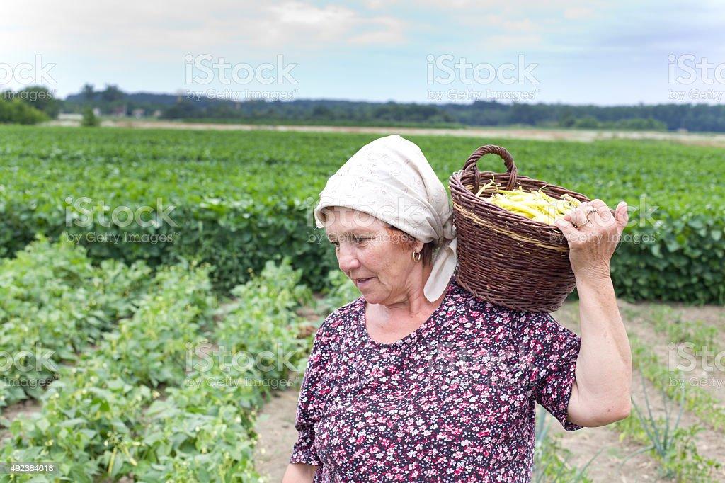 Land Frau mit Korb mit gelben bean – Foto