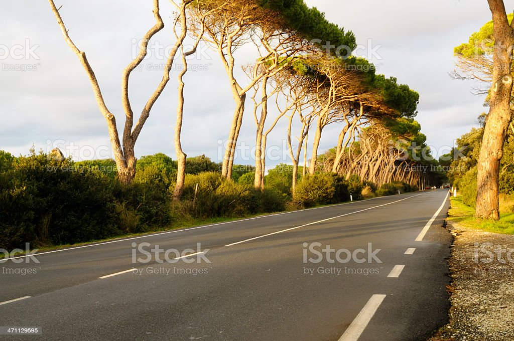 Countryroad royalty-free stock photo