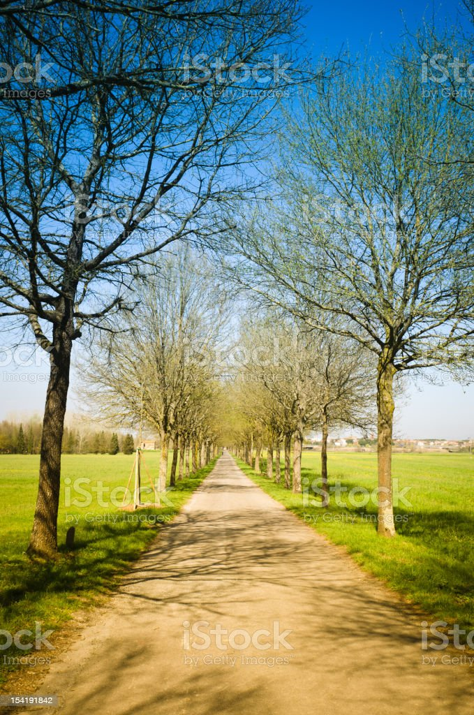 Countryroads with Tree Canopy royalty-free stock photo