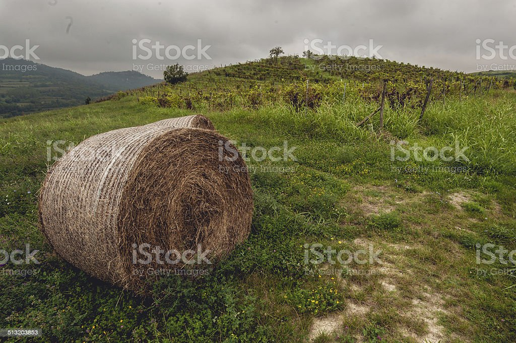 Countryside and vineyard stock photo