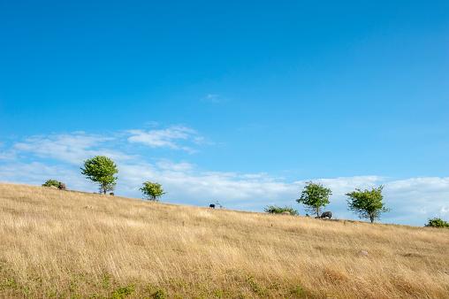 Countryside at Cape Arkona