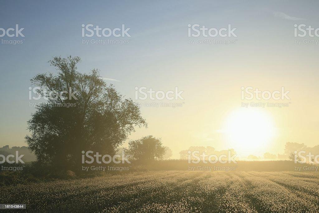 Countryside at dawn royalty-free stock photo