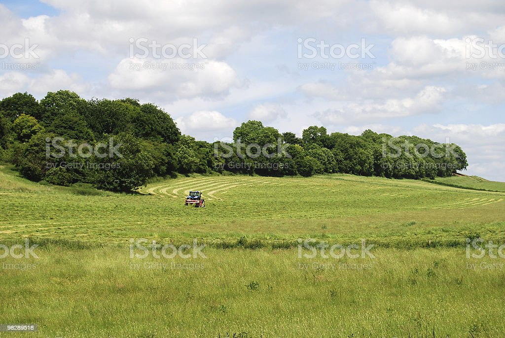 Campagna a Langrish, West Sussex, Inghilterra foto stock royalty-free