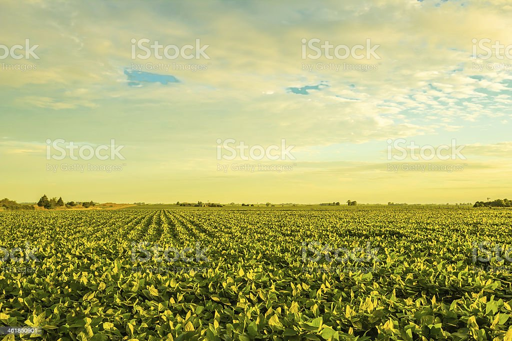 Countryside at sunset stock photo
