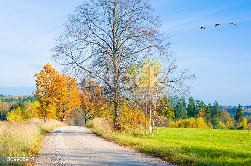 istock Countryside gravel road among forest and fields in autumn 1309905912