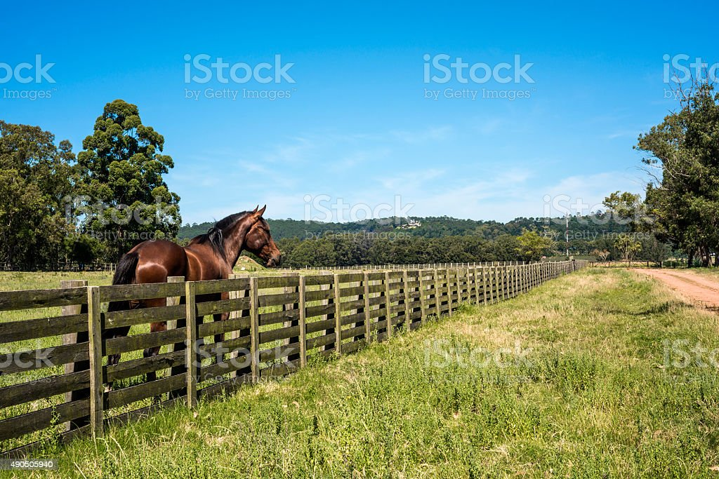 Countryside in Maldonado Department of Uruguay stock photo