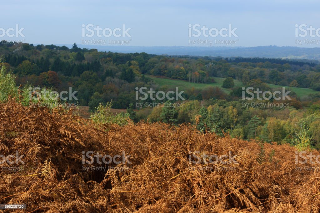 countryside in the Ashdown forest stock photo